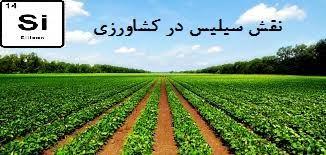 اهمیت سیلیس در کشاورزی