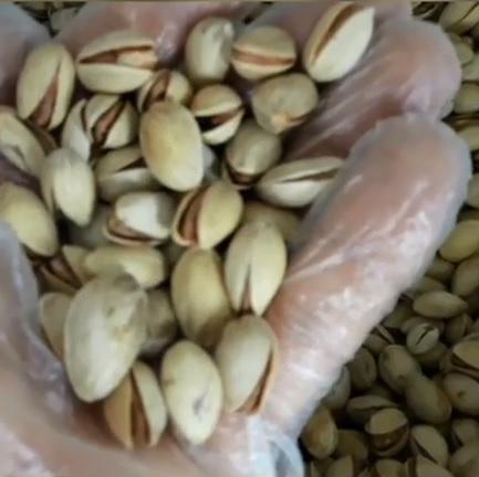بذر پسته بادامی ریز زرند
