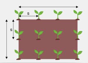 احداث اصولی باغ