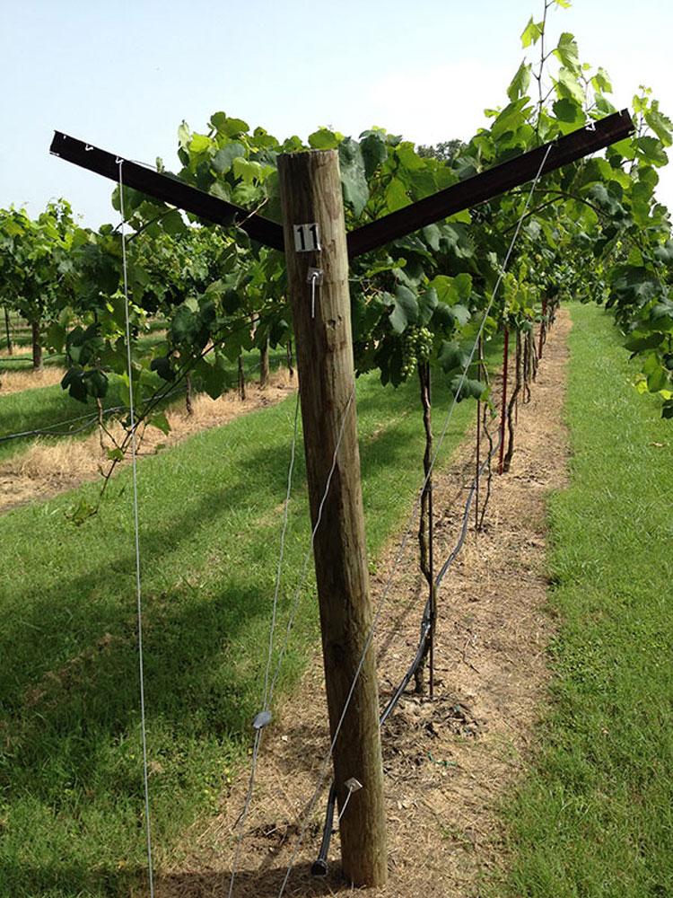 محل مناسب برای احداث باغ انگور
