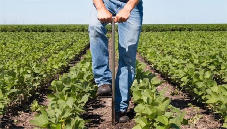 نمونه برداری از خاک مزرعه