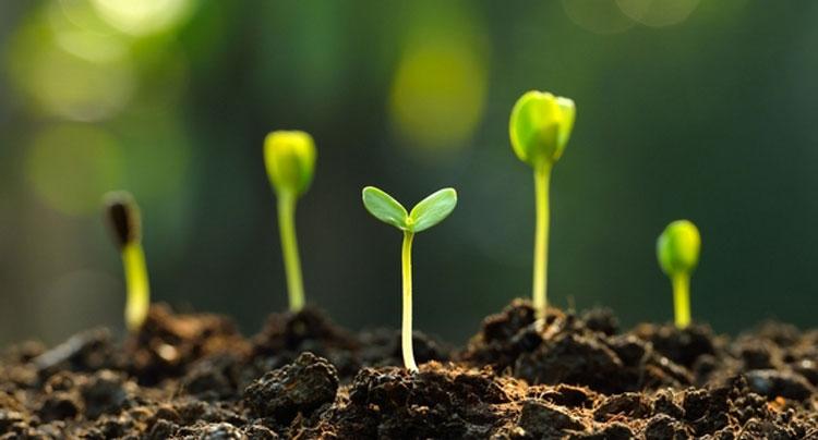 اهمیت خاک