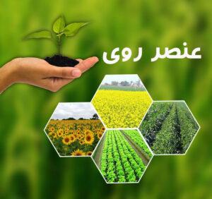 نقش عنصر روی در کشاورزی